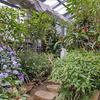 冬の温室で*亜熱帯植物*