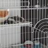 【猫のケージ選び】大型3段アイリスオーヤマ ペットケージ  口コミレポ