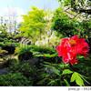 【奈良】緑豊かな日本庭園