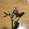ぐったりした花を生き返らせる方法