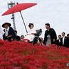 咲き誇る彼岸花と花嫁 ― 矢勝川沿いの300万本の彼岸花(その2) ―