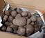 「空いた時間にスマホで農業」のRagriから収穫された里芋が届きました