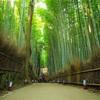 京都のお勧めスポット!鉄板の嵐山エリア紹介。