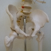 弱点は右側~股関節の痛み