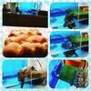 亀のゴン太🐢観察日記④