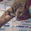母性溢れるお姉ちゃん猫★