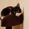 今日の黒猫モモ&白黒猫ナナの動画ー886