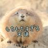 【動物ひとコマ#1】もちもちすぎた冬のプレーリードッグ【千葉市動物公園】