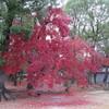 仁和寺へ紅葉を見に行く(京都)…過去20161127