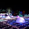 【フローランテ宮崎】冬の多彩なイルミネーションがきれいな庭園。