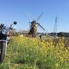 オランダ風車から春の息吹を
