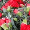 今日は母の日!日中は晴れ、夏日の27℃?日陰に入ると風が涼しかった!