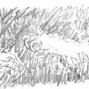 ニュースで英語術 「ジンベエザメの口内に新種のヨコエビ発見」