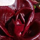 花見る人の植物記