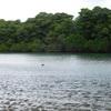 石垣島への旅! その9 マングローブ林、そしてまとめ。