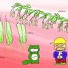 トウモロコシは他家受粉