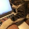 猫好きなら絶対あるある!テレワークで「猫を吸って」しまうジレンマ。