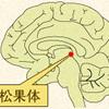 じじぃの「人間の意識・デカルトは松果体を魂のありかと呼んだ?脳と心の謎に挑む」