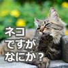 猫の如く上品にズボる3つの方法