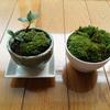 盆栽植え替え