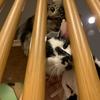 <お知らせ>保護猫サロン修繕いたしました!