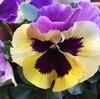 春の花の苗