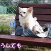 チロクマランの応援は飛行犬まろんちゃん【GWの過ごし方◆その19】