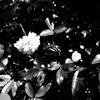 OLYMPUSのコンデジ 「XZ-10」で2017年4月24日までに撮影した写真を紹介します。カワセミを撮りました
