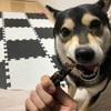 【アイペット】ペット保険について真面目に考えてみる。