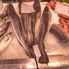【多摩っこ】本当に美味しいお魚屋さん②日野市魚久さん
