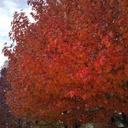 紅葉の映える日々。