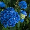 72 祐徳稲荷神社参詣記 (3)2017年6月8日 (収穫ある複数の取材)