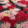 芳村の花市場