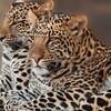 発情期の動物たち ―『動物談叢』―