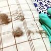 家政夫のミタゾノで紹介されていた家事テクニックが凄い! 猫の毛が簡単に掃除できました