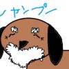 寝たきりのシニア犬・高齢犬へシャンプーをする方法!