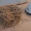 鳥の巣が原因で雨漏りすることがあるので要注意です。