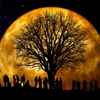 1月31日はスペシャルな満月!スペイン語で関連記事を一緒に読んでみよう