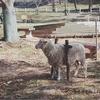 【親子でお出かけ】六甲山牧場で自然に触れ、動物と触れ、食に触れよう