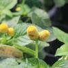 入荷情報 9月2週目! 秋らしい植物は、いまだけですよ♪