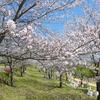 ふれあいスポーツランドの桜(2019年4月8日)