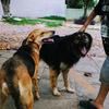 ワンコ Jagua Perro 犬 Dog