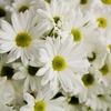 葬儀供花の送り方種類やマナーを解決!