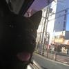 犬の祭典、行って来ました!〜甲斐犬サンの憂いεー(^。^;)フゥ。