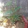 家庭菜園について
