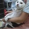 猫の好酸球性肉芽腫群