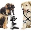 【福岡】犬の皮膚病を診てもらえるオススメ病院は?