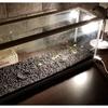 水草ストック水槽(ミスト式)実験を開始
