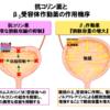 頻尿、尿失禁の治療 過活動膀胱の治療について 薬物療法