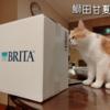 雨田甘夏、バレバレです。【猫と生ごみと獲物事情】